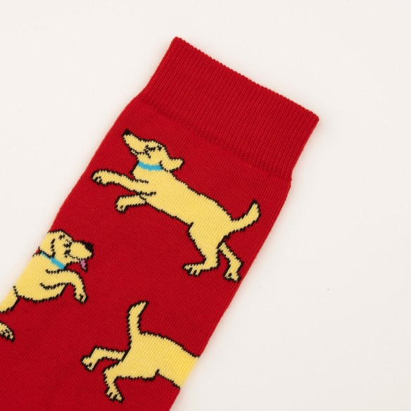 Closeup dog socks coucou suzette